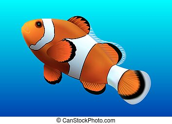 Clownfish on blue background