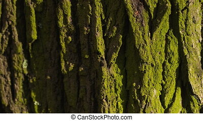 Bark of a Tree - Green Bark of a Tree