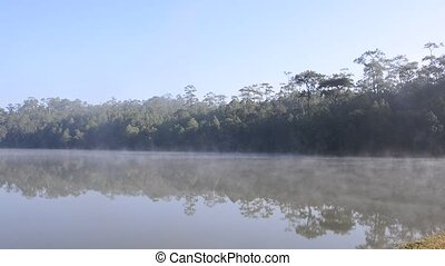 Mist on a lake - Mist on a lake at dawn with tree reflected...