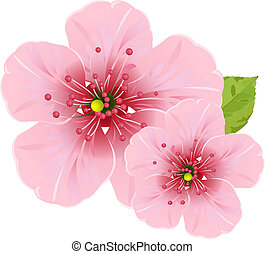 Cherry blossom flowers - Illustration of cherry blossom...