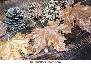 Leaves, prickle, pine cone - Dried leaves, prickle, pine...