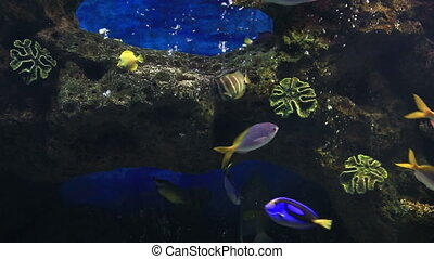 Beautifully decorated saltwater aquarium with fish. -...