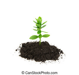 plant tree growing seedling in soil isolated on white