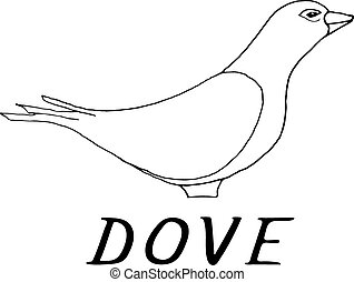 Hand draw dove style sketch