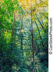 Forest trees Filtered image processed vintage effect -...