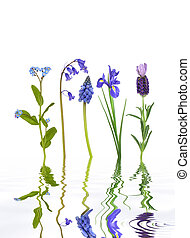 Spring Flower Beauty - Forget me knot, bluebell, hyacinth,...