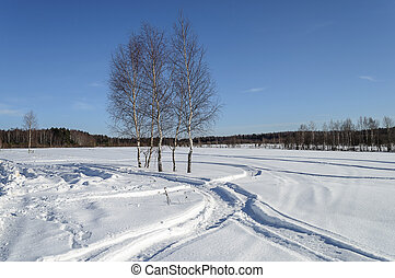 Bare birch trees in snow field on the forest edge