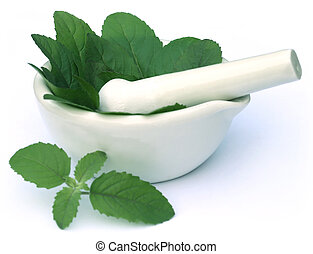 Medicinal holy basil or tulsi leaves with mortar and pestle