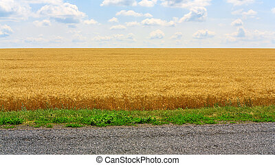 Field - Landscape with the wheat field