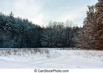 Forest landscape - Landscape with the winter forest and sky