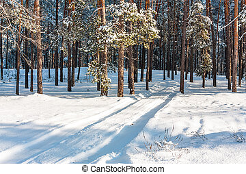 Rut - Landscape with the snow rut in winter forest