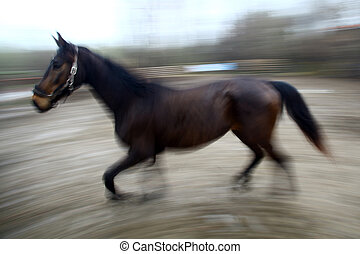 Running horse - Motion blur picture of a running dark horse