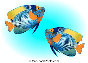 blueface angelfish on blue background