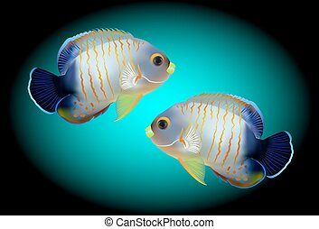 angelfish, one of mostly colorful coral fishes. Vector...