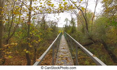 bridge over the river in the forest