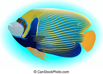 Emperor Angel Fish Adult - angelfish, one of mostly colorful...