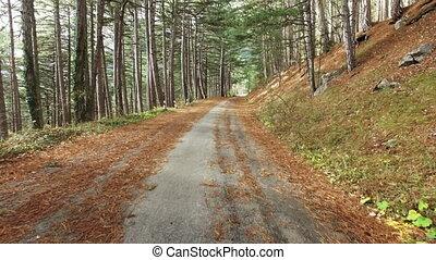 walks in autumn forest
