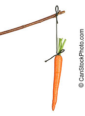 Carrot - Fresh red carrot hanging on white background