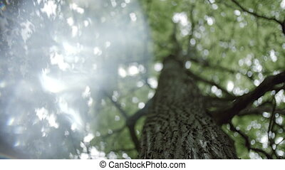 4k Crohns oak tree with sun leak bottom view - Crohns oak...