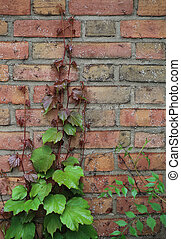 Wall and Leaf