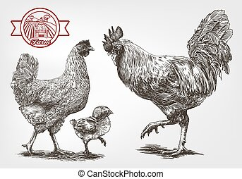 Sketch of brood-hen - brood-hen sketches made by hand on a...
