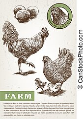 Sketch of brood-hen and rooster - brood-hen and rooster....