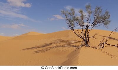Sahara Landscape - Typical landscape of the Sahara Desert...