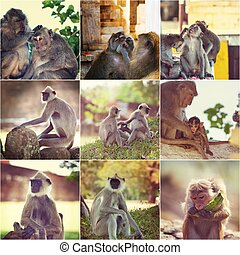 Monkey collage - Monkey set