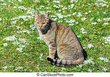 Cat on the Field among the White Flowers