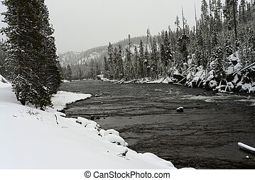 Winter Madison River Yellowstone - Snowy Morning on the...