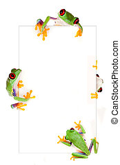 Frog frame - Young red eyed tree frog isolated on a white...