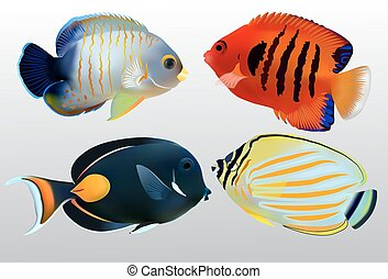 Colorful Marine Fish