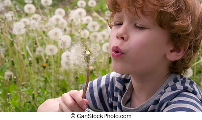 Boy Surrounded by Dandelions - Funny curly boy sitting on a...