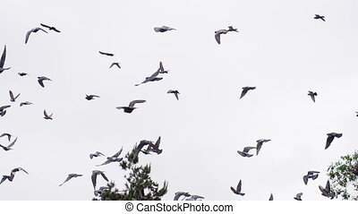 Flock of Birds Above the Trees - A large flock of birds...