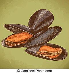 illustration of mussel - Vector engraving illustration of...