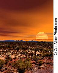 Sunset Sonora Desert - Sunset Sonora desert in central...