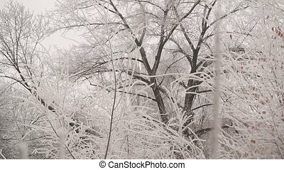 Winter White Forest - white forest covered with frost