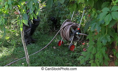 Watering in the Garden - Worker twists the garden hose is...