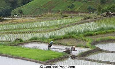 Farmer plowing the fields with a motor-powered plow in Rice...