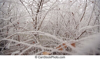 Frozen Branches In A Park - white forest covered with frost