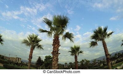 Palm trees with clouds on sea promenade