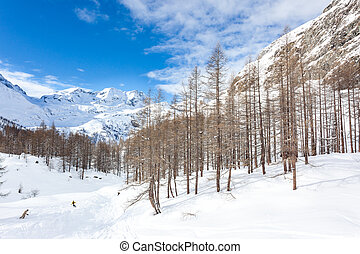Snowboarders skiing in a snowy mountain forest