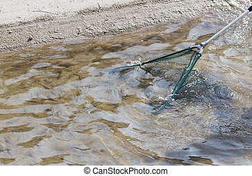 fishing with a net in the river