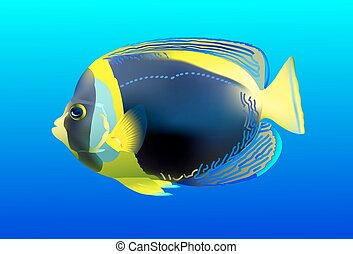 angelfish, one of mostly colorful coral fishes Vector...