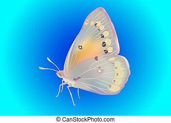 realistic vector butterflies