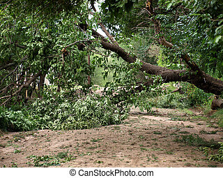 fallen tree because of heavy storm