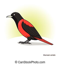 Maroon oriole bird educational game vector - Maroon oriole...