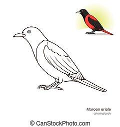 Maroon oriole bird coloring book vector - Maroon oriole bird...