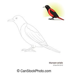 Maroon oriole bird learn to draw vector - Maroon oriole...