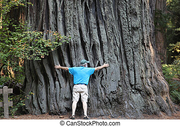Giant Redwood - Mature six foot tall man with arms...